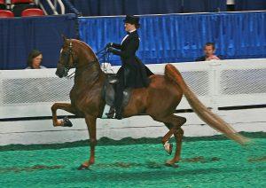 Alternative Horse Sports